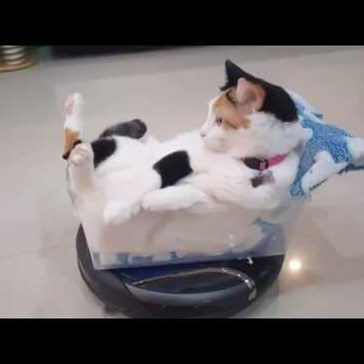 Chill Cat Relaxes on a Roomba While It Cleans the House