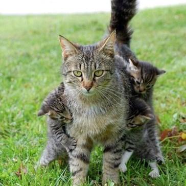 Mom! Mom? MOM!