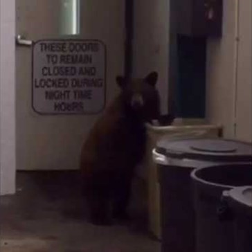 "Bear Thinks Twice About Knocking Over a Trash Can After Deputy Tells Him ""No!"""