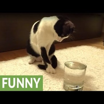 Cat Can't Seem to Wrap Her Head Around the Concept of Fizzy Water