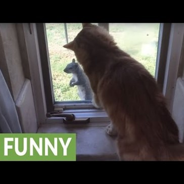 Indoor Cat Gets Teased by a Squirrel That Knows Exactly What He's Doing