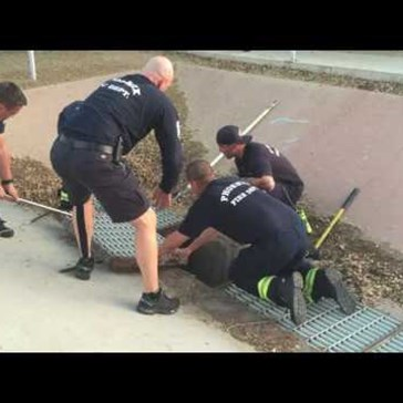 Firefighters Rescue Baby Ducklings That Fell Through a Grate