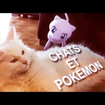 "This French Video of Cats ""Hunting"" Pokémon is Both Bizarre and Amazing"