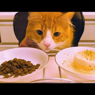 Lucky Kitty Feasts on Fresh Cat Food Made by a Chef