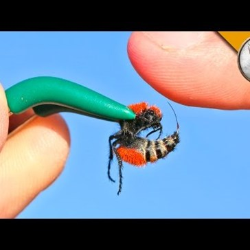 "Watch This Guy Experience the Excruciatingly Painful Sting of A ""Cow Killer"" Bug... for Science?"