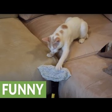 Chapy the Cat Battles the Evil Steam Cleaner on His Home Turf