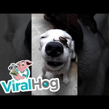 Snail Slides Across the Nose of a Very Patient Dog