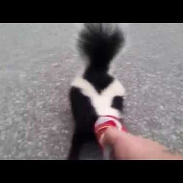 Good Guy Helps a Skunk That Got Stuck in a Soda Can