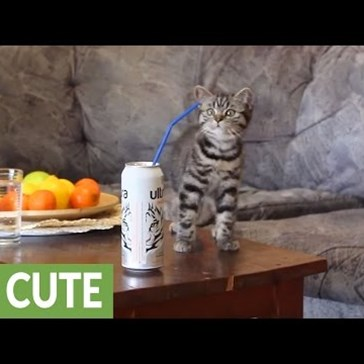 Kitten Can't Quite Figure Out What to Do With a Straw, Has to Call in Mom for Backup