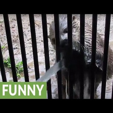 Playful Otter Loves Getting Sprayed With a Water Hose