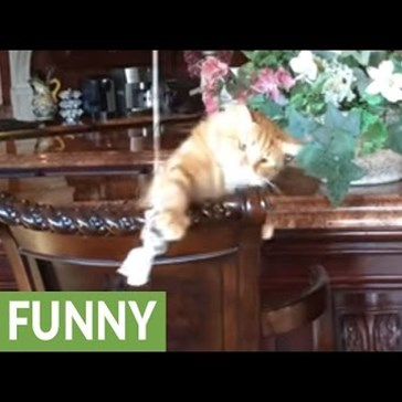 Kitty Steals His Own Catnip Toy Because Humans Can't Be Trusted
