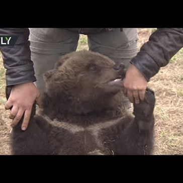 This Rescued Bear Cub Lives With Humans at an Airfield in Russia