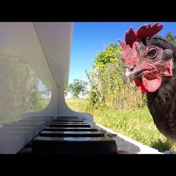 Patrick the Chicken Plays the Piano With a Little Help From French Musician, Igorrr