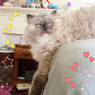 This Cat Might Be the Sassiest Floof We've Ever Seen