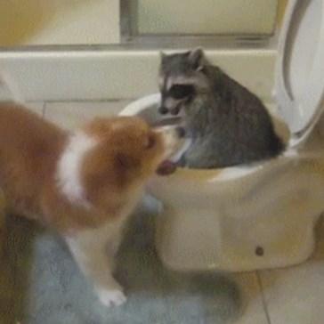 A Little Toilet Humor