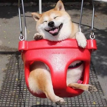 Happy Shiba Inu Swings Its Way Into a Fantastic Photoshop Battle