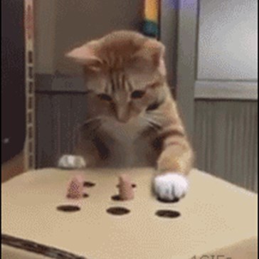 Kitty Playing Whack a Finger