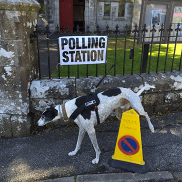 Brexit Voters Must Have Been Distracted by These Adorable #DogsAtPollingStations