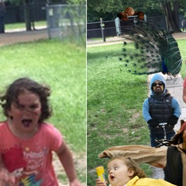 An Angry Peacock Turned a Family Trip to the Petting Zoo into a Photoshop Battle for the Ages