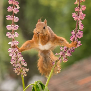 Squirrel Does the Splits and Immediately Gets a Photoshop Battle