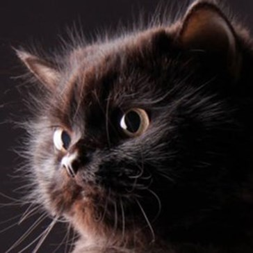 Quiz: What Do You Know About Black Cats?