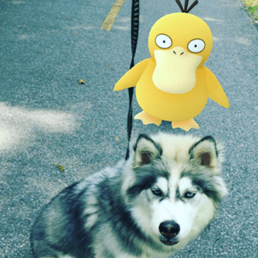Taking Your Dog for a Walk Has Never Been More Fun, Thanks to Pokémon Go