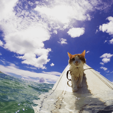 Kuli, the One-Eyed Surfing Cat Loves Catching Tasty Waves