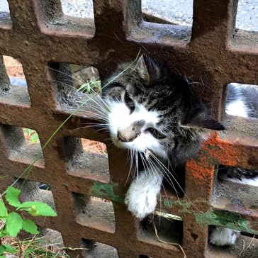 Curiosity Almost Killed This Cat That Got Her Head Stuck in a Grate