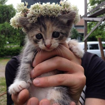 Kitten Crown of Preciousness