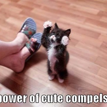 The power of cute compels you!