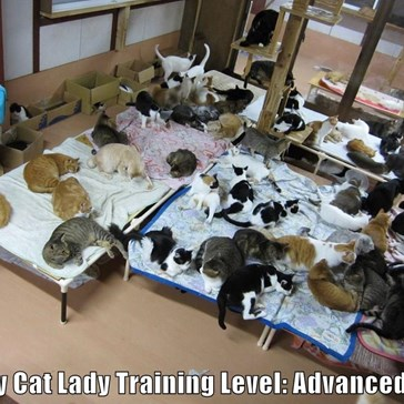 Crazy Cat Lady Training Level: Advanced