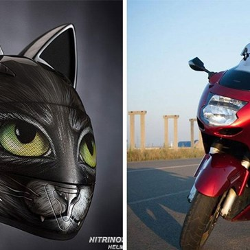 How to Look Purrfect Cruising Around