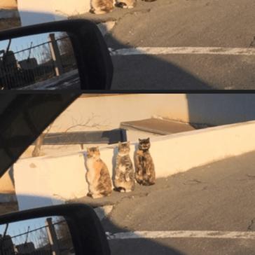 All The Single Kitties