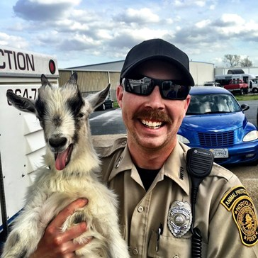 Goat Poses for Amazing Photo After Leading Police on a Wild Chase