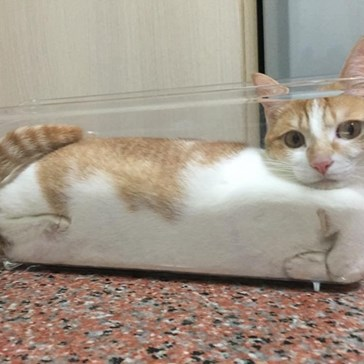 When the Recipe Calls for Two Quarts of Liquid Cat