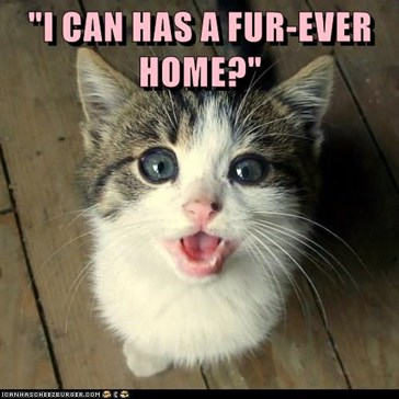 """I CAN HAS A FUR-EVER HOME?"""
