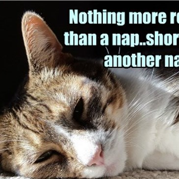 Nothing more relaxing than a nap..shortly after another nap.