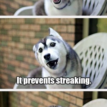 Husky Pup Tells a Pretty Good Joke