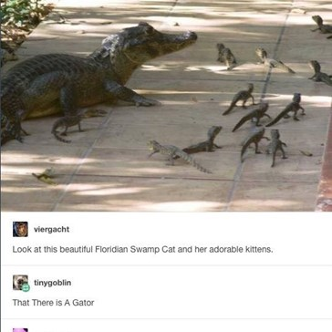 Don't Be Fooled by the Florida Swamp Cat