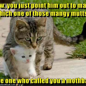 You Don't Mess With a Mama Cat