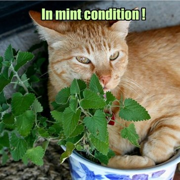 The Cat, Not the Plant