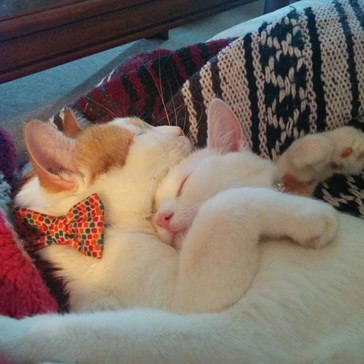 Cuddle Kittens