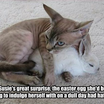 To Susie's great surprise, the easter egg she'd been saving to indulge herself with on a dull day had hatched.