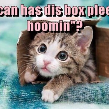 """I can has dis box pleeze hoomin""?"