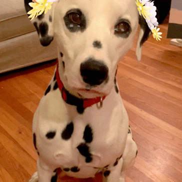 Silly girls, Snapchat filters are for dogs.