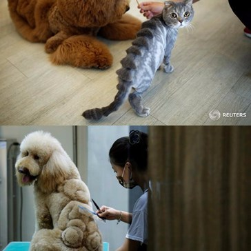 A Pet Grooming Salon in Taiwan Is Responsible for These Hair Raising Designs