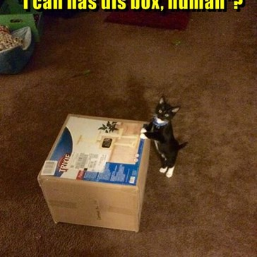"""I can has dis box, human""?"