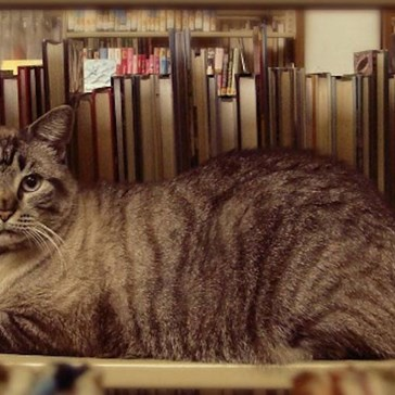 Mayor of White Settlement City, Texas Just Accused City of Anti-Cat Bias After Cat Was Evicted from Library