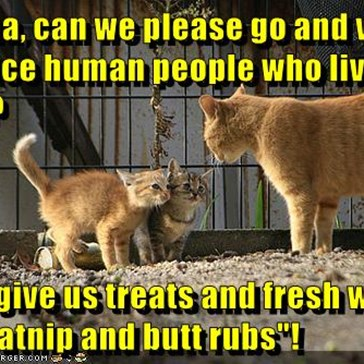 """Mama, can we please go and visit the nice human people who live here?  They give us treats and fresh water and catnip and butt rubs""!"