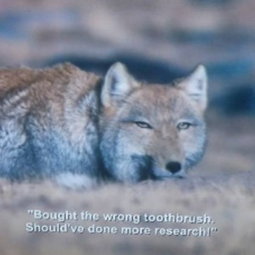Netflix Accidentally Made a Meme by Adding Aziz Ansari's Standup Captions to a Nature Show